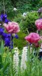cropped-flowers1.jpg