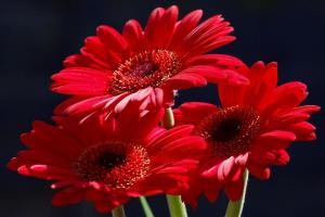 Red Flowers 1(1)