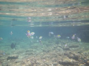 tiny fishes