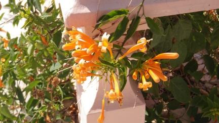 saffron5