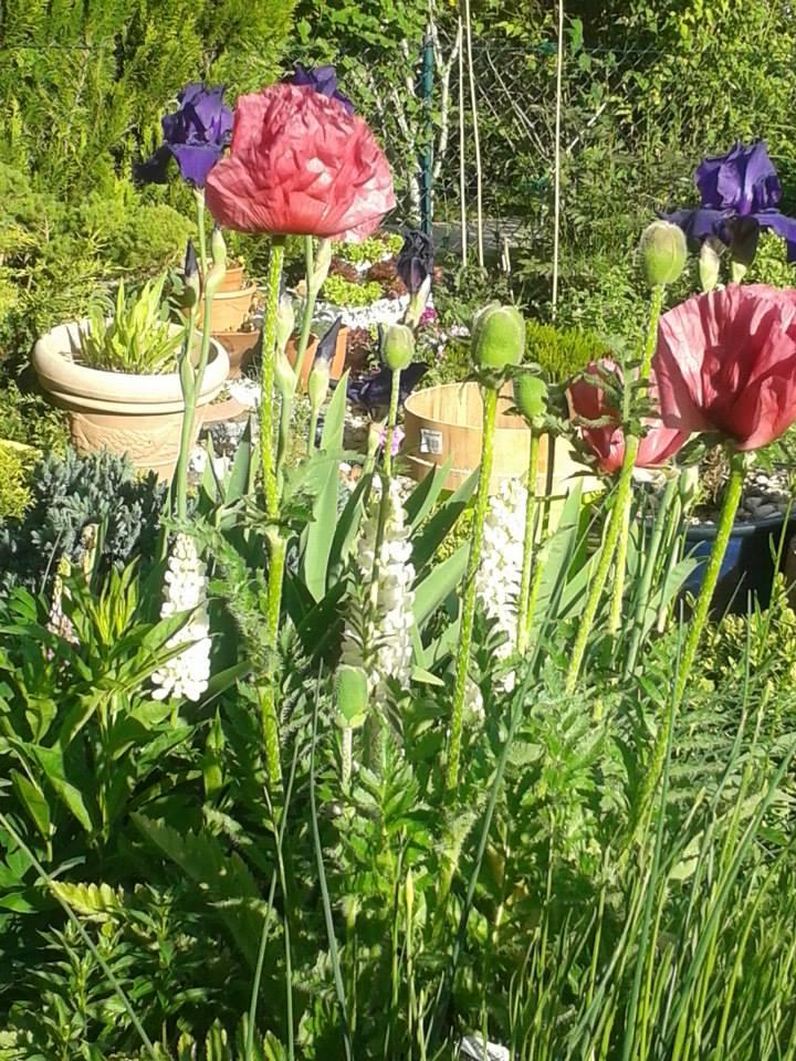 flowers in our garden