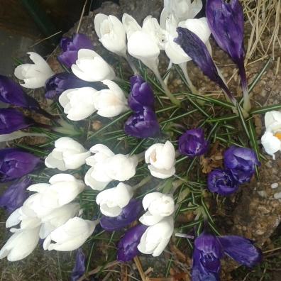 fresh flowers in the garden