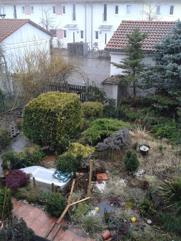 our wet garden