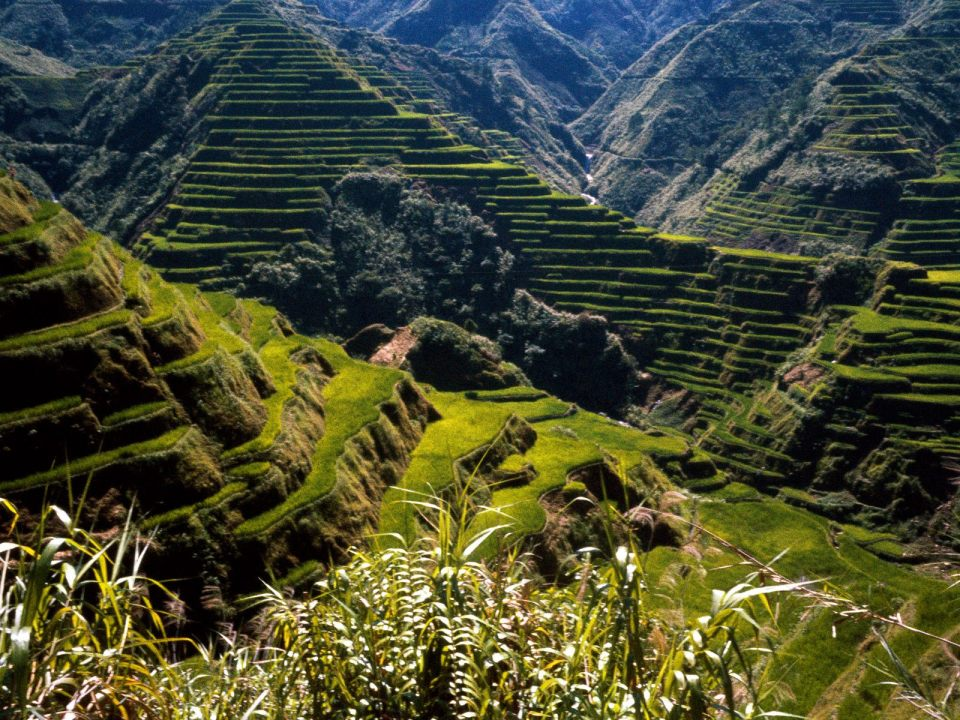 Ancient_Rice_Terraces_Philippines