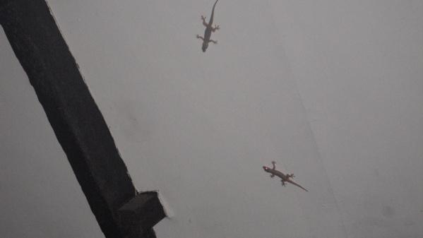 tiny lizards