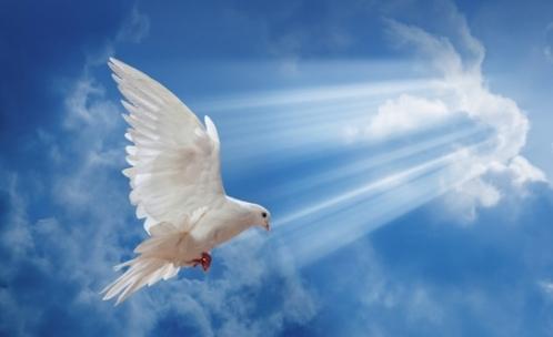 doves_539_330_c1