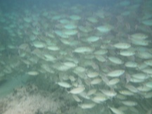 blanket of fish