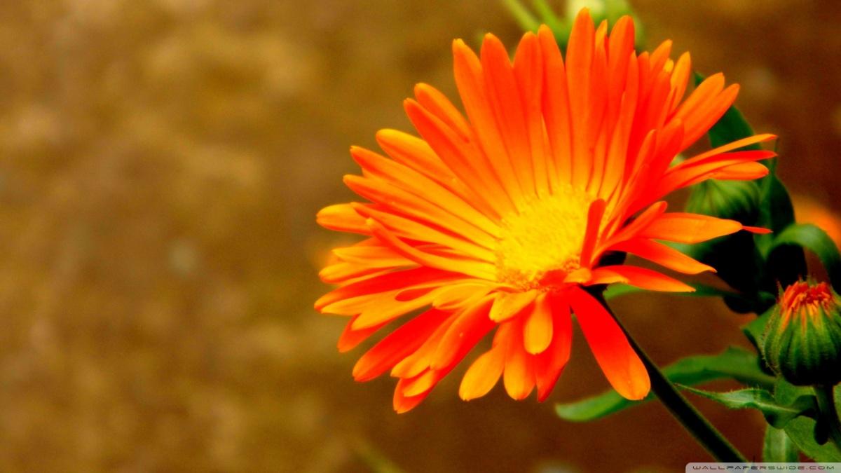 orange-flowers-29