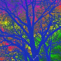 B&P Shadorma & Beyond - Psychedelic Tree