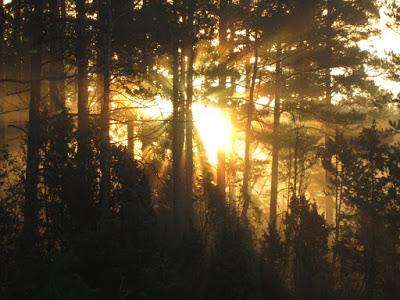 sunrise-280778_960_720