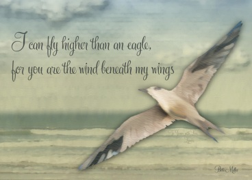 daggs-wind-beneath-my-wings